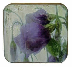 Lisianthus box heat transfer